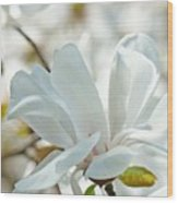 White Magnolia Tree Flower Art Prints Magnolias Baslee Troutman Wood Print