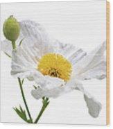 White Matilija Poppy On White Wood Print