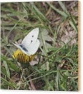 White Moth Wood Print