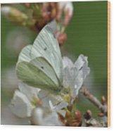 White Moth On Blossom Wood Print