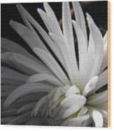 White Mums Wood Print