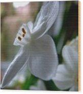 White Narcissi Spring Flower 4 Wood Print