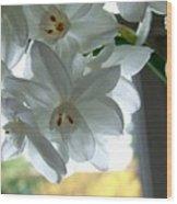 White Narcissi Spring Flower Wood Print