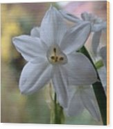White Narcissi Spring Flowers 3 Wood Print