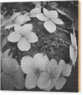 White On Black Hydrangea Petals Wood Print