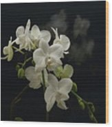 White Orchid And Reflection Wood Print