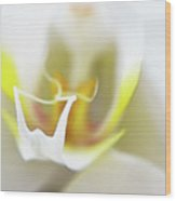 White Orchid Art By Sharon Cummings Wood Print