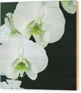 White Orchid Elegance Wood Print