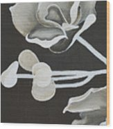 White Orchid First Section Wood Print