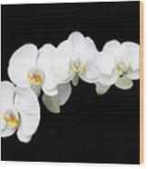 White Orchid Flower Wood Print