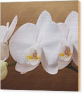 White Orchid Flowers And Bud Wood Print