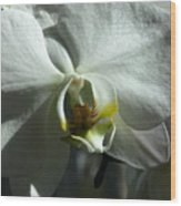 White Orchid In Spring Wood Print