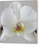 White Moth Orchid Wood Print
