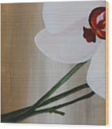 White Orchid Light Background First Section Wood Print