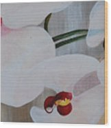 White Orchid Light Background Middle Section Wood Print
