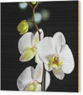 White Orchid On Black Bw Wood Print