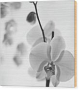 White Orchid On White Bw Wood Print