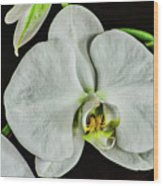 White Orchid On Black Wood Print
