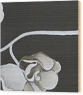 White Orchid Third Section Wood Print