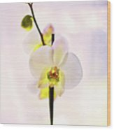 White Orchid V2 Wood Print
