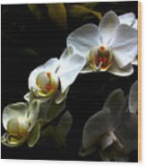 White Orchid With Dark Background Wood Print by Jasna Buncic