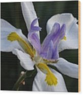 White Orchid With Yellow And Purple Wood Print