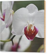 White Orchids 2 Wood Print