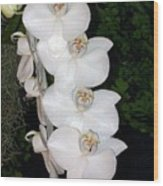 White Orchids California Wood Print