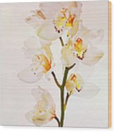 White Orchids Faux Watercolor Wood Print