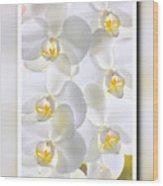 White Orchids Framed Wood Print