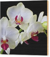 White Orchids Wood Print by Garry Gay