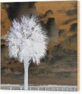 White Palm Wood Print