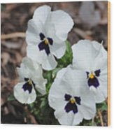 White Pansies Wood Print