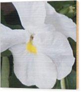 White Pansy Wood Print