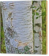 White Paper Birch Bark Along Bike Trail Near Walker-minnesota Wood Print