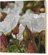 White Paper Petals Wood Print