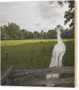 White Peacock At Magnolia Plantation Wood Print