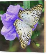 White Peacock Butterfly On Purple 2 Wood Print