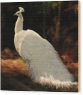 White Peacock In Golden Hour Wood Print