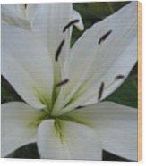 White Pearl Wood Print