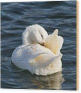 White Pekin Duck In Blue Water Preening Wood Print