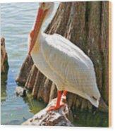 White Pelican By Cypress Tree Wood Print