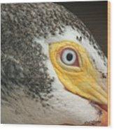 White Pelican Eye Wood Print