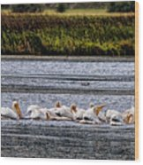 White Pelicans Kootenay Lake Wood Print