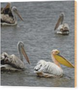 White Pelicans On Lake  Wood Print