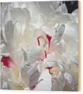 White Peony And Red Highlights Wood Print
