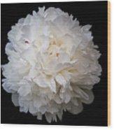 White Peony Flower Wood Print