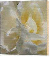 White Peony Tulip Detail Wood Print