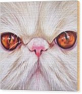 White Persian Cat Wood Print