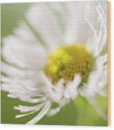 White Petal Flower Abstract Wood Print